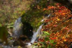 紅葉が綺麗な吐竜の滝