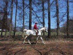 八ヶ岳の風の中で乗馬体験