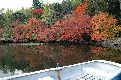紅葉の綺麗な白駒池
