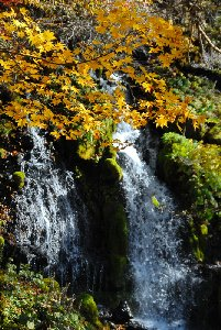 黄葉の吐竜の滝