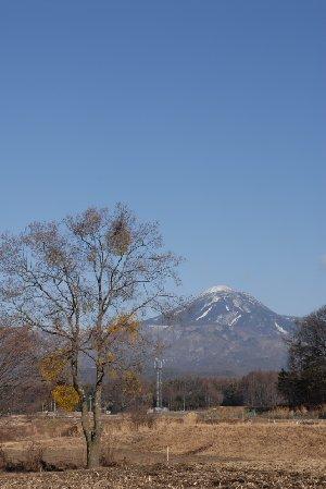 ヤドリギと蓼科山