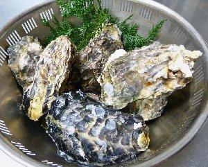 新鮮な殻つき牡蛎