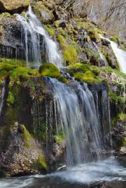 苔と吐竜の滝