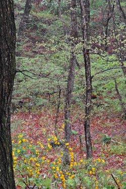 濡れた林と山吹
