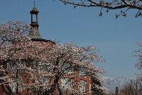 桜の時季の清春芸術村