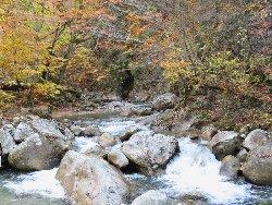 本谷川の紅葉