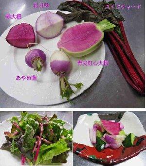秋の彩り野菜でサラダと浅漬け