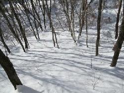 雪景色の裏庭
