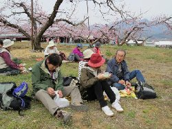 桃の花の下でお弁当