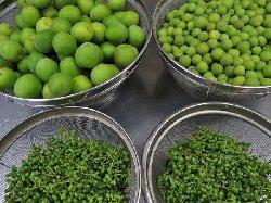梅と庭で採った山椒の実