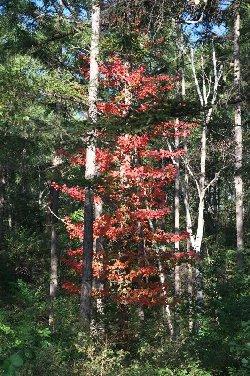 鉢巻き道路の紅葉