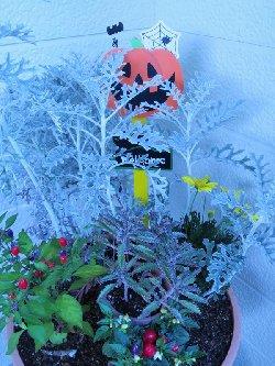 ハロウィンを意識した寄せ植え