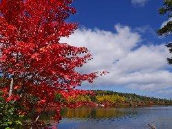 紅葉真っ盛りの白駒池