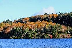 ダケカンバの黄葉が碧い湖面に映えています