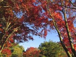 小渕沢の紅葉