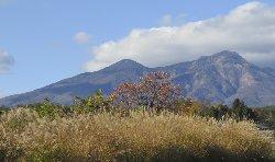 柿の木と八ヶ岳