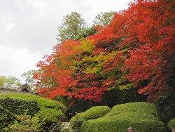 詩仙堂 庭の紅葉