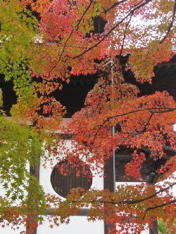 経蔵と紅葉
