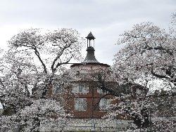 アトリエ「ラ・リューシュ」と桜