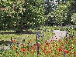 諏訪中央病院5月の庭