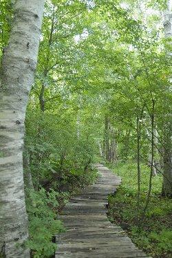 新緑の八ヶ岳倶楽部