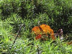 原生林の苔に落ち葉