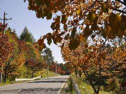 鉢巻道路の紅葉