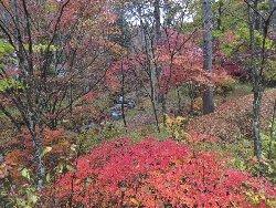 紅葉に染まる夢宇谷