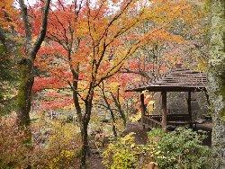 紅葉真っ盛りの昇仙峡