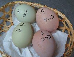 産みたて卵