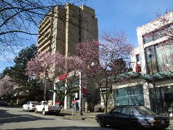 桜咲くロブソン通り脇道