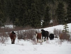 馬たちが自由にお散歩