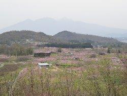 新府城址から眺めた桃源郷