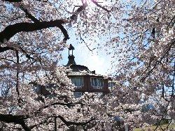 清春芸術村の桜とラ・リューシュ(蜂の巣)