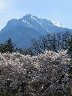 清春芸術村の桜と甲斐駒ヶ岳