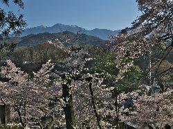 清泰寺 三門からの桜と山