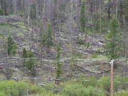松食い虫被害林