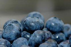 大粒ブルーベリー