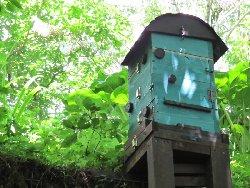 ミツバチのお家