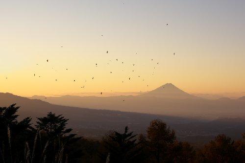 朝焼けの中飛ぶアトリの群