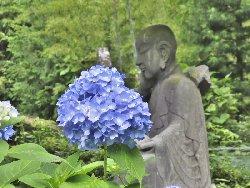 石仏とアジサイ