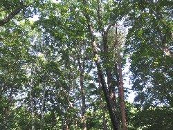 裏の雑木林