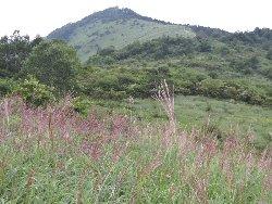 八島湿原と蝶々深山