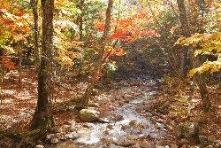 本谷川渓谷の紅葉