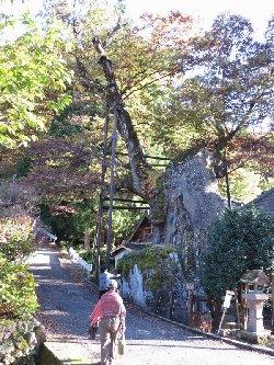 根古屋神社の大欅 田木