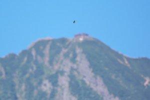 赤岳山頂とツバメ
