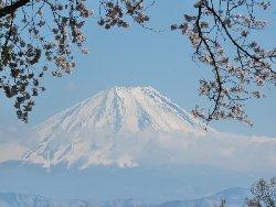 穴山からの桜と鳳凰三山