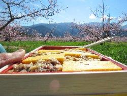 桃の花の下ででお弁当
