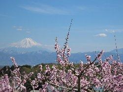 新府の桃源郷からのの富士山