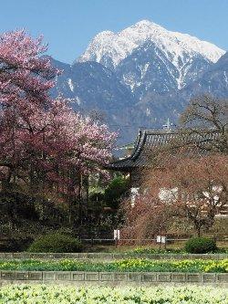 甲斐駒ヶ岳と実相寺の境内